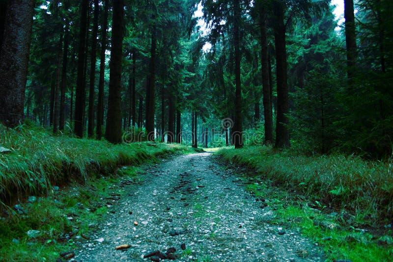 Forêt #7 photo libre de droits