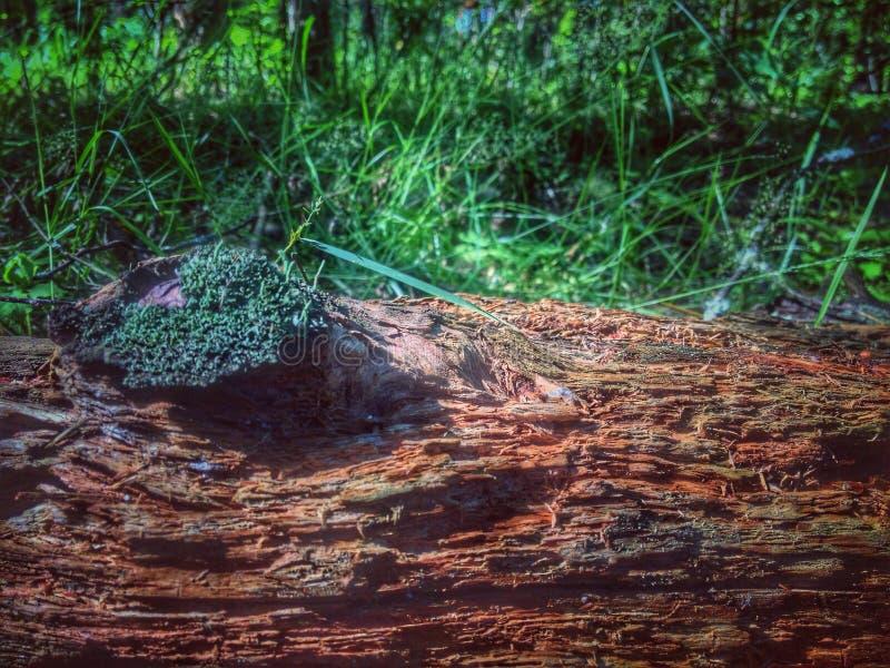 Download Forêt image éditorial. Image du ambiance, arbre, forêt - 76082060