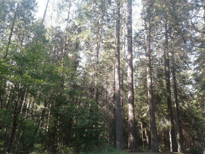 Forêt photographie stock libre de droits