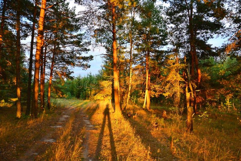 Forêt, allumée par le coucher du soleil photos stock