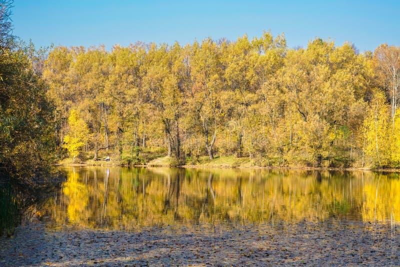 Forêt, allumée par le soleil chaud de l'automne tôt photographie stock
