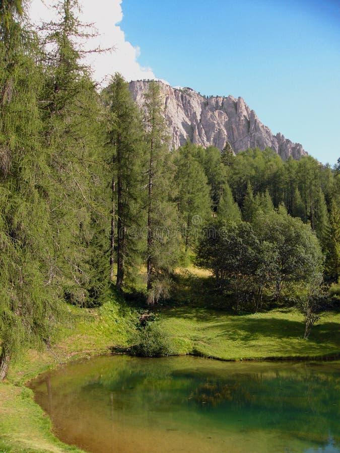 Forêt alpestre par le lac Italie image libre de droits