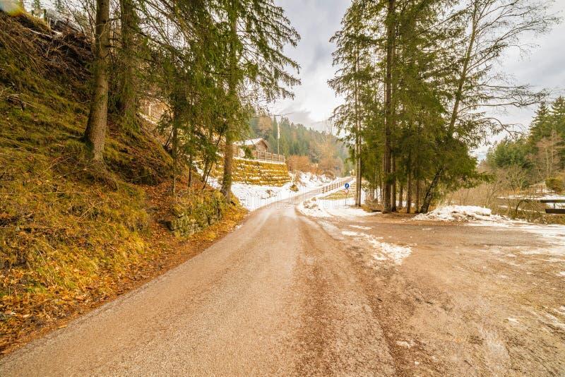 Forêt alpine de croisement de chemin de terre photo libre de droits