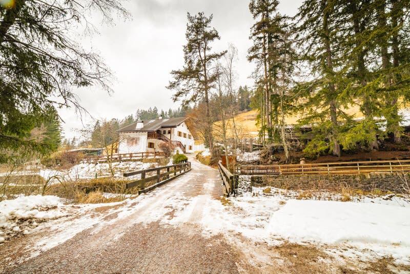 Forêt alpine de croisement de chemin de terre photo stock