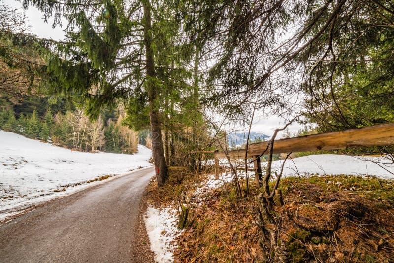 Forêt alpine de croisement de chemin de terre images stock