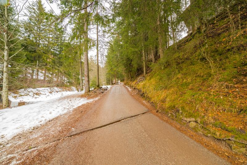 Forêt alpine de croisement de chemin de terre photos stock