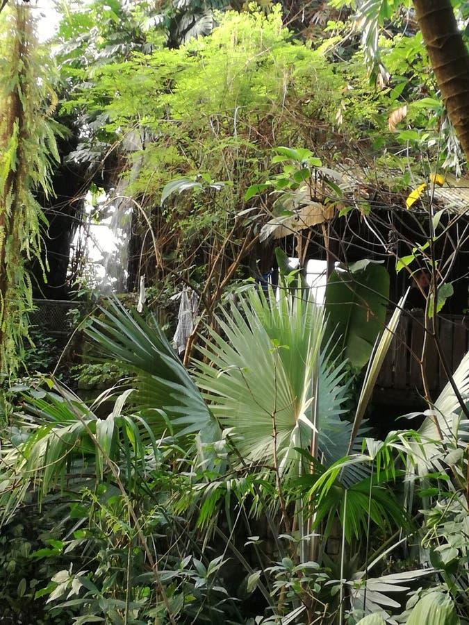 Forêt/Amazone photo libre de droits