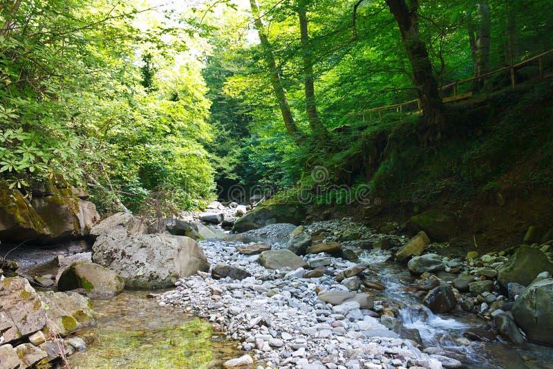 Forêt antique de relique avec un courant de montagne le jour ensoleillé photos libres de droits