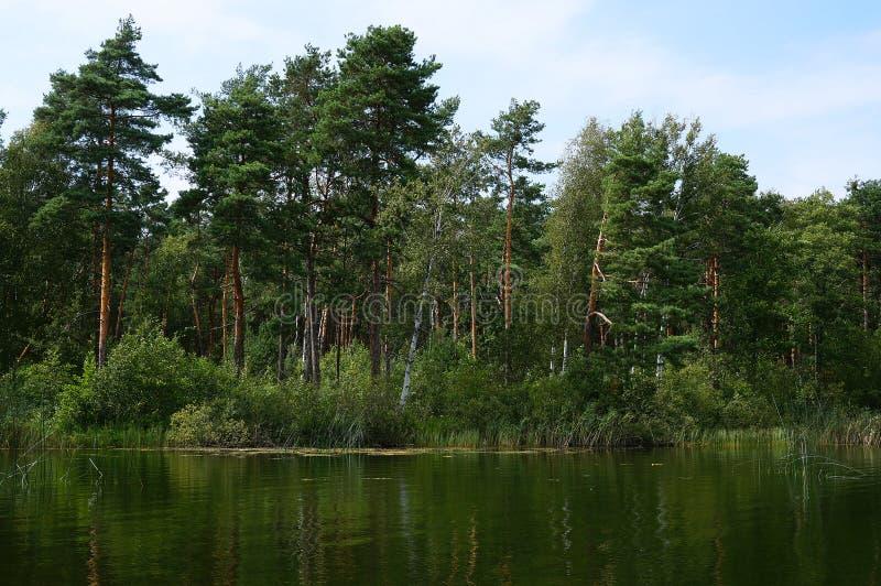 Forêt au lac Pisochne près de Shatsk photo stock