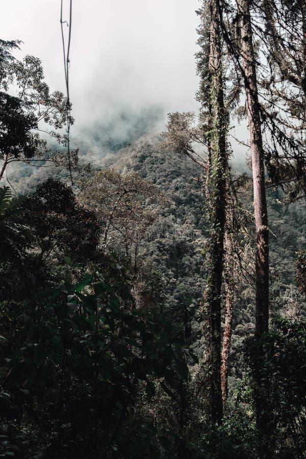 Forêt au milieu des montagnes un matin nuageux image stock