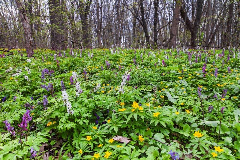 Forêt au printemps photographie stock