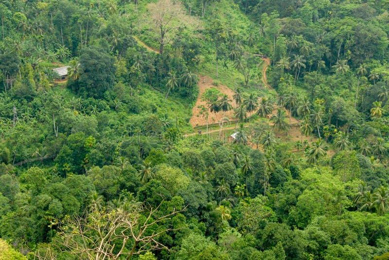 Forêt au Sri Lanka photos libres de droits