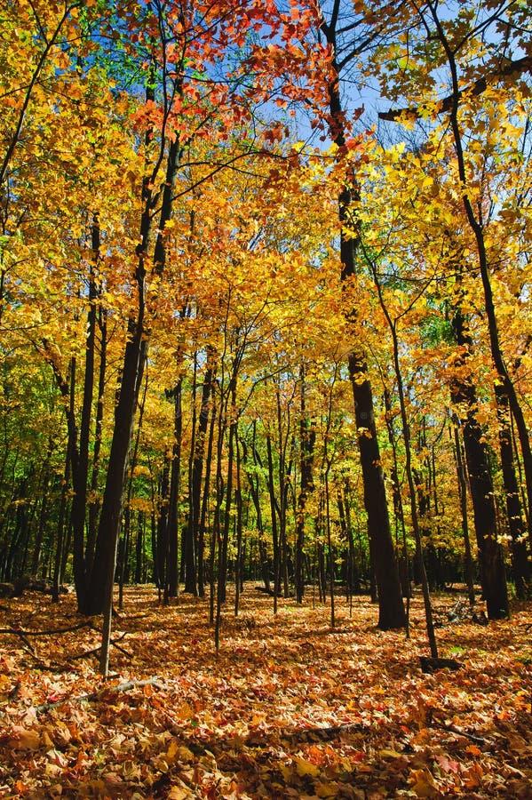 Forêt automnale photographie stock