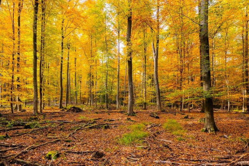 Download Forêt automnale photo stock. Image du forêt, lames, europe - 45359602