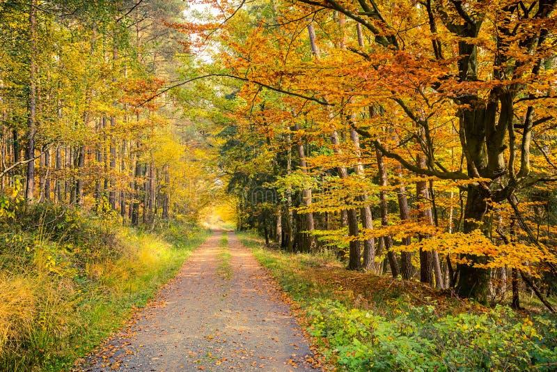 Download Forêt automnale photo stock. Image du européen, couleur - 45359604