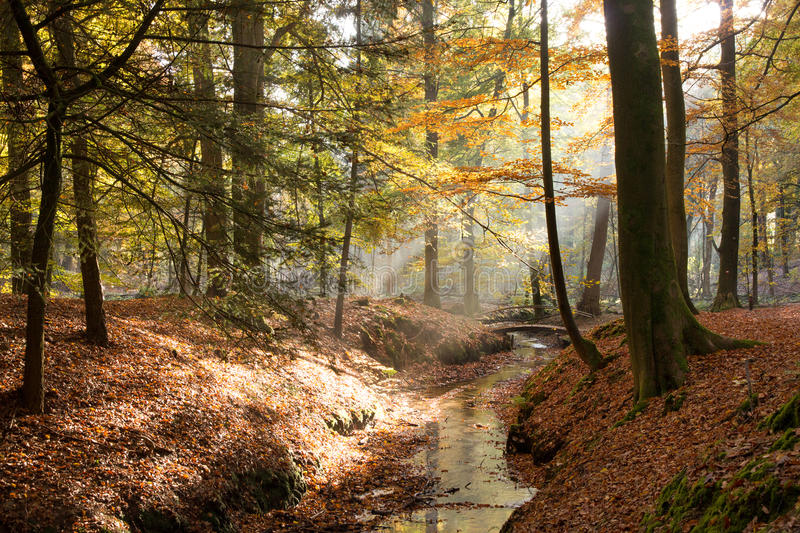 Forêt automnale images stock