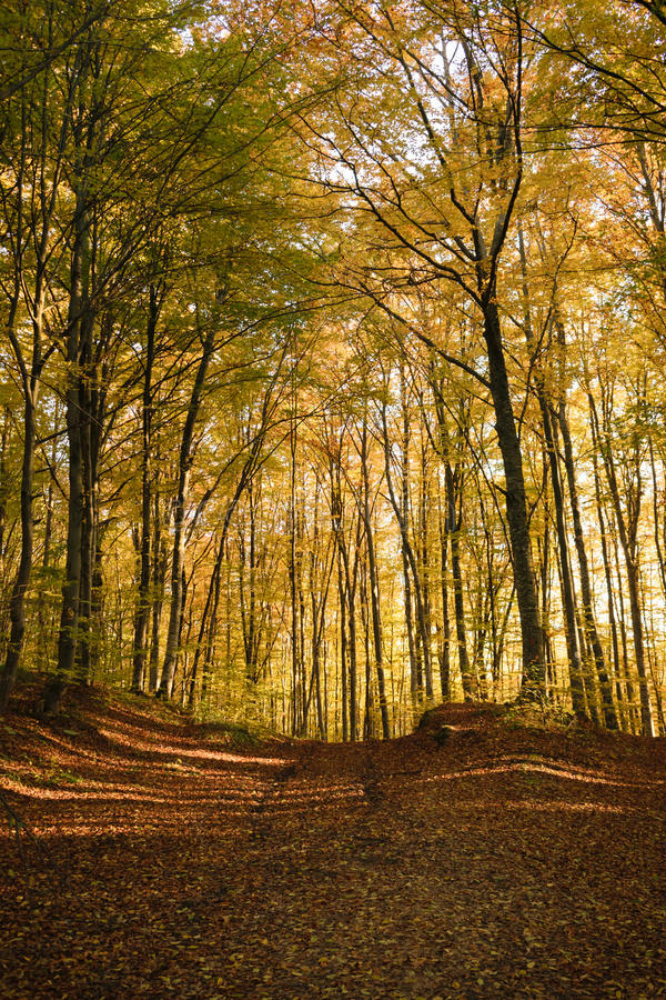 Forêt automnale image libre de droits