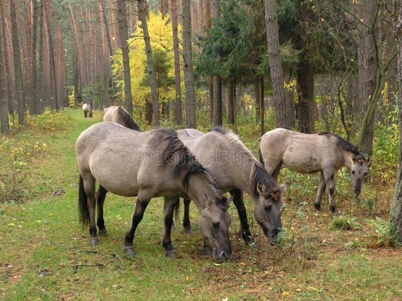 Forêt, automne photographie stock libre de droits
