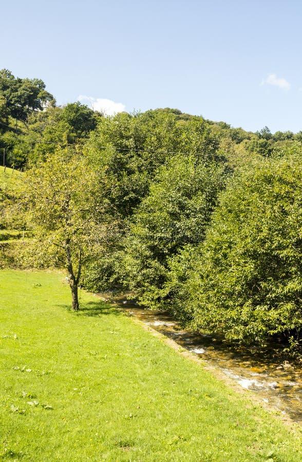Forêt avec des champs images stock