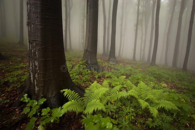 Forêt avec la centrale et le regain de fougère image libre de droits
