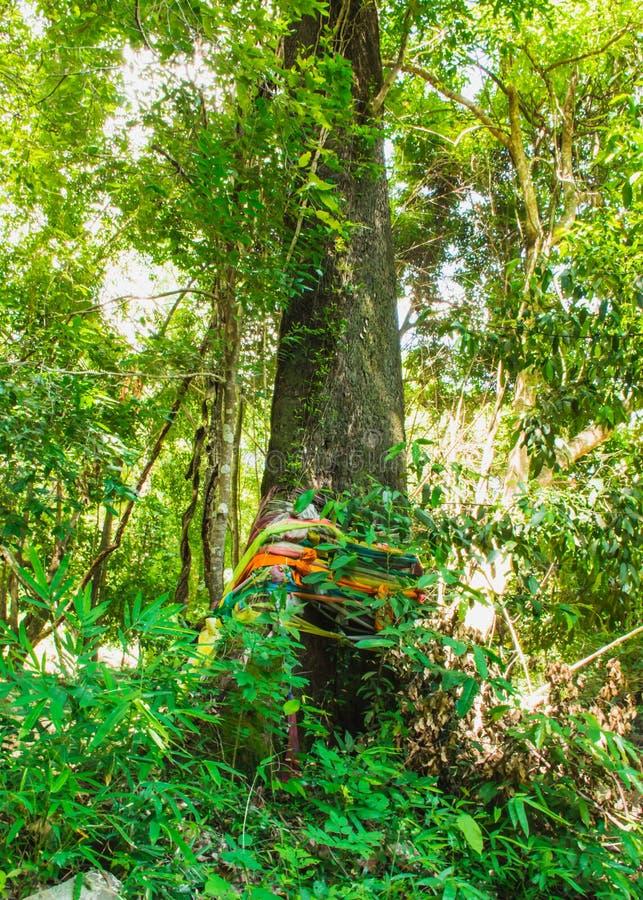Forêt avec la foi photographie stock libre de droits