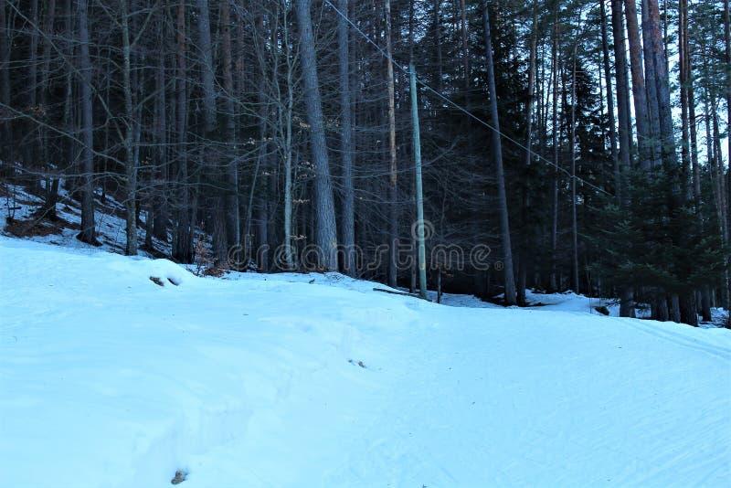 forêt avec la neige images stock