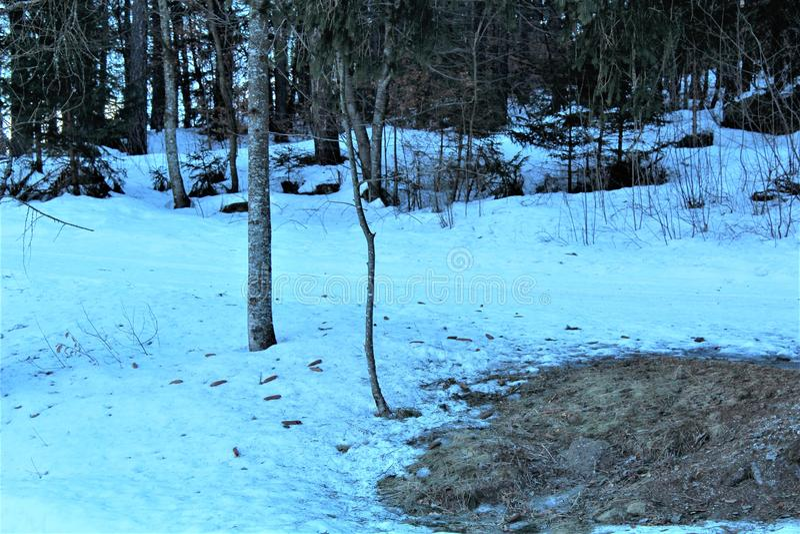 forêt avec la neige image stock