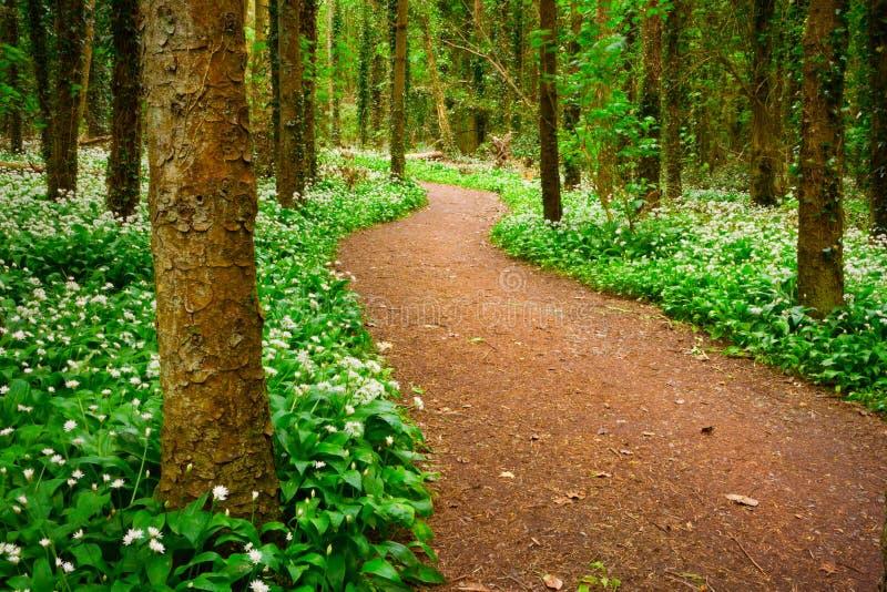 Forêt avec les fleurs sauvages blanches image libre de droits
