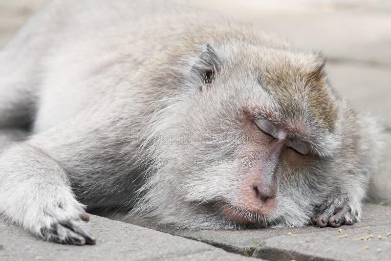 Forêt Bali de singe image stock