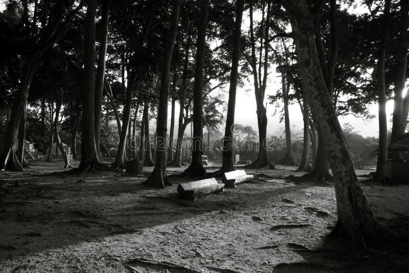 Forêt, banc et huttes à la plage photos libres de droits