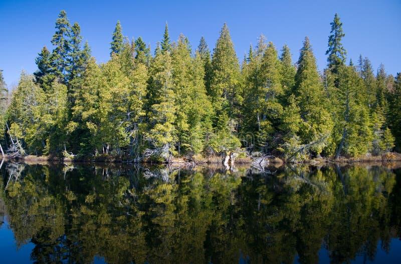 Forêt boréale image libre de droits