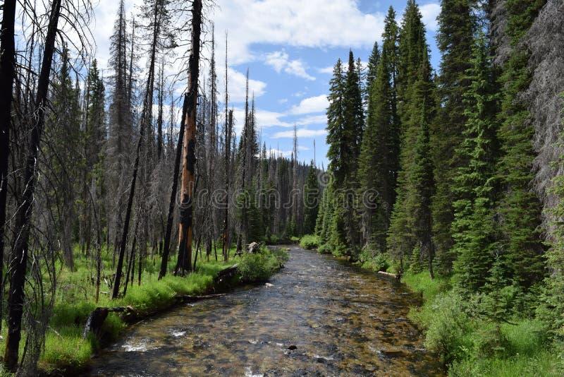 Forêt brûlée et non brûlée photos libres de droits
