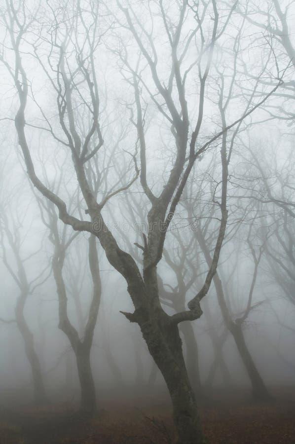 Forêt brumeuse photo stock