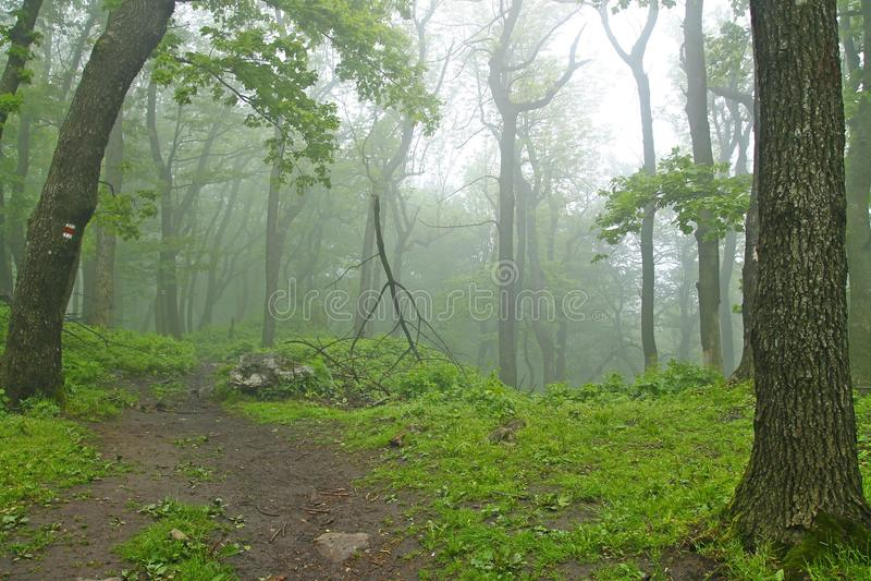 Forêt brumeuse images libres de droits