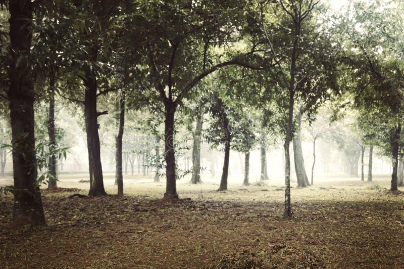 Forêt brumeuse au jour image libre de droits