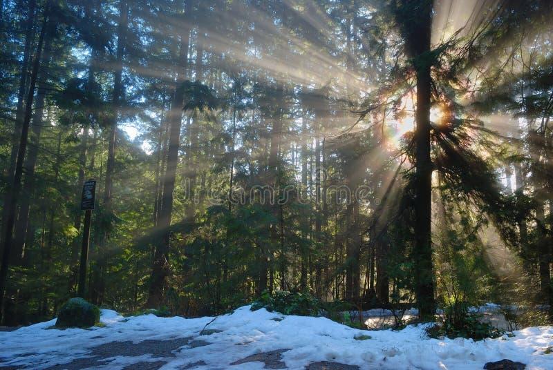 Forêt brumeuse avec le faisceau du soleil photographie stock libre de droits