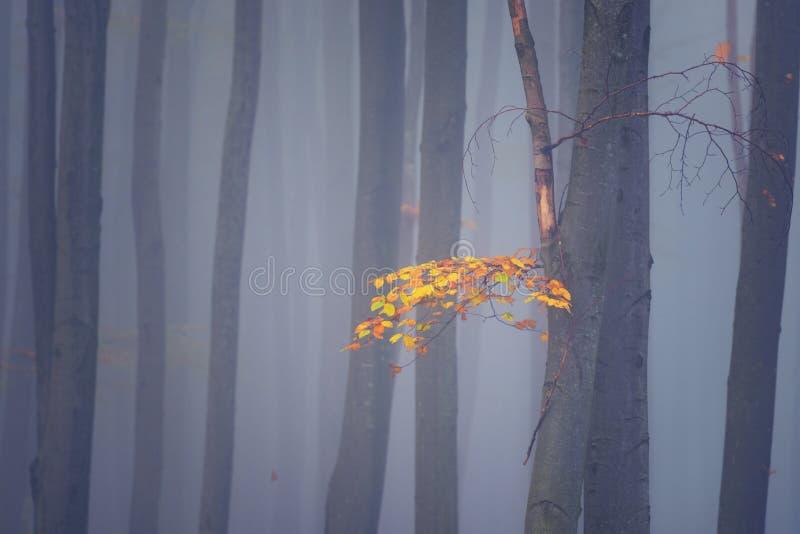 Forêt brumeuse d'automne, fond minimaliste abstrait de nature photo stock