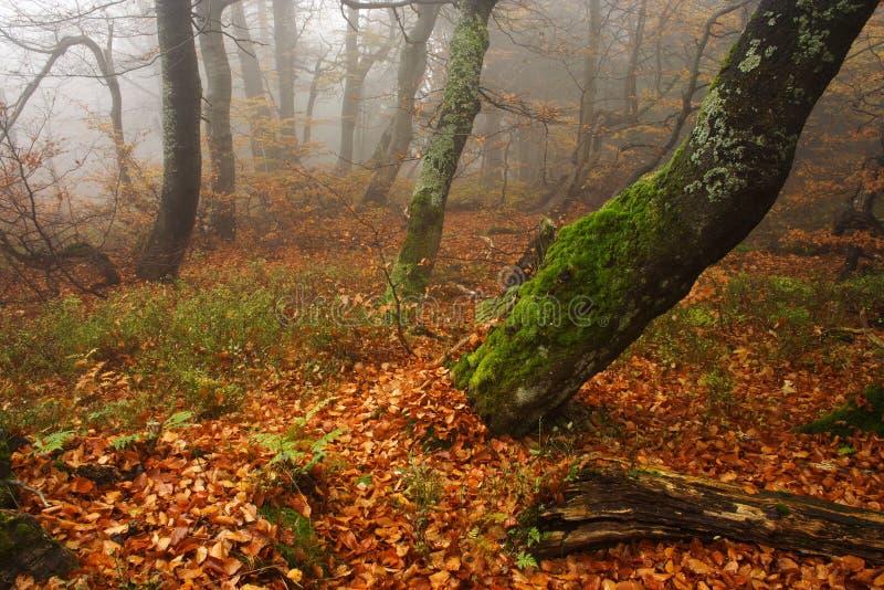 Forêt brumeuse en montagnes géantes image libre de droits