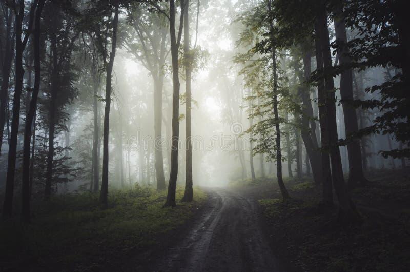 Forêt brumeuse enchantée par cuvette de route images stock