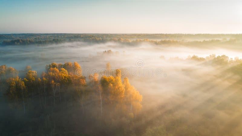Forêt brumeuse et lever de soleil de silhouette d'automne avec le rayon de soleil, séance photos par le bourdon image libre de droits