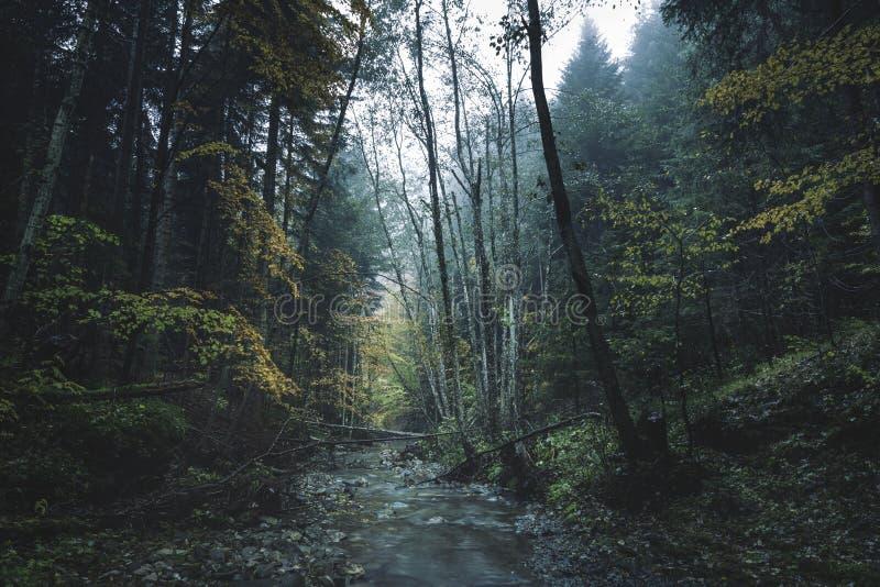 Forêt brumeuse foncée photos stock