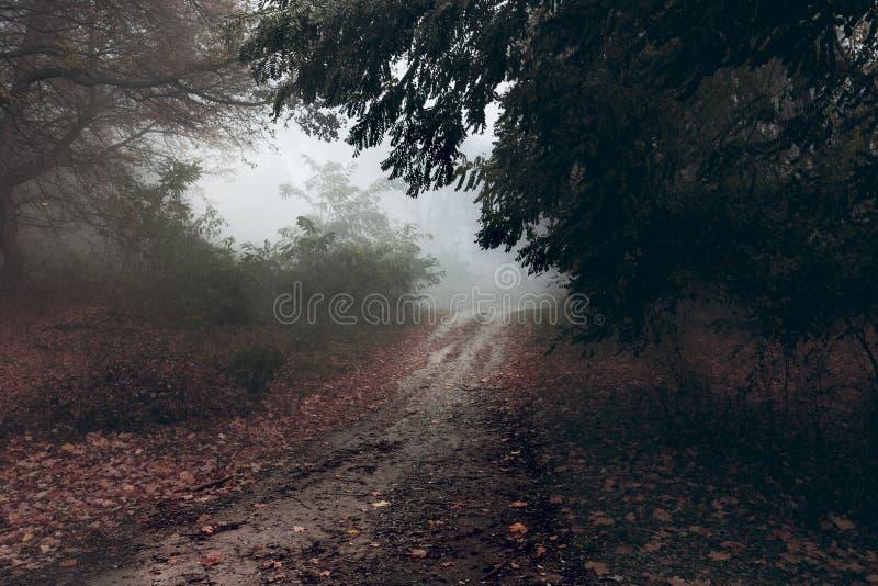 Forêt brumeuse foncée photos libres de droits