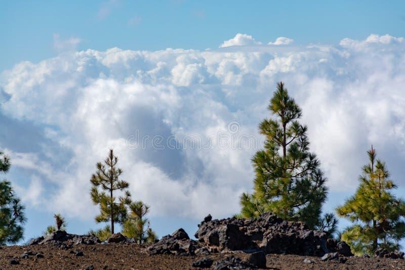 Forêt canarienne verte de pin et gisements de lave volcaniques sur la plus haute montagne dans le bâti Teide, Tenetife, îles Cana photographie stock