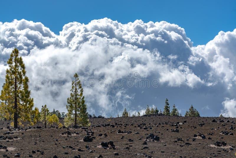 Forêt canarienne verte de pin et gisements de lave volcaniques sur la plus haute montagne dans le bâti Teide, Tenetife, îles Cana photographie stock libre de droits
