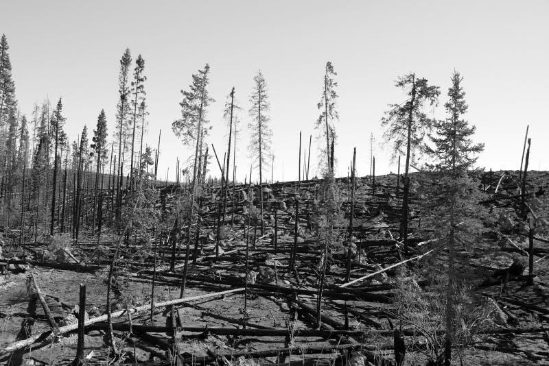Forêt carbonisée photographie stock libre de droits