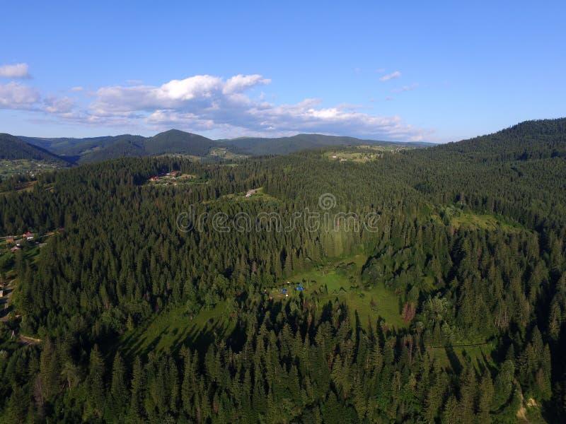 Forêt carpathienne photographie stock