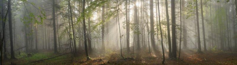 Forêt carpathienne magique à l'aube image libre de droits