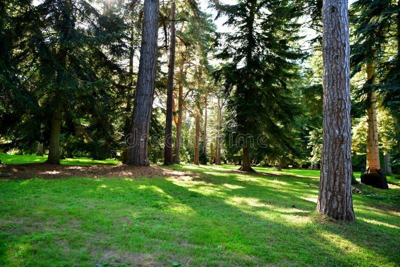 Forêt, champignons, ordures de forêt, ouatine, cônes, route photo stock