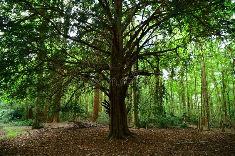 Forêt, champignons, ordures de forêt, ouatine, cônes, route image stock