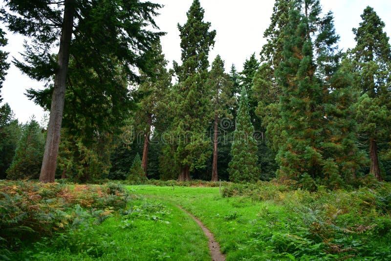 Forêt, champignons, ordures de forêt, ouatine, cônes, route photographie stock